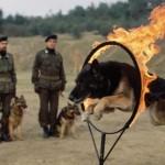 köpekveefendisi